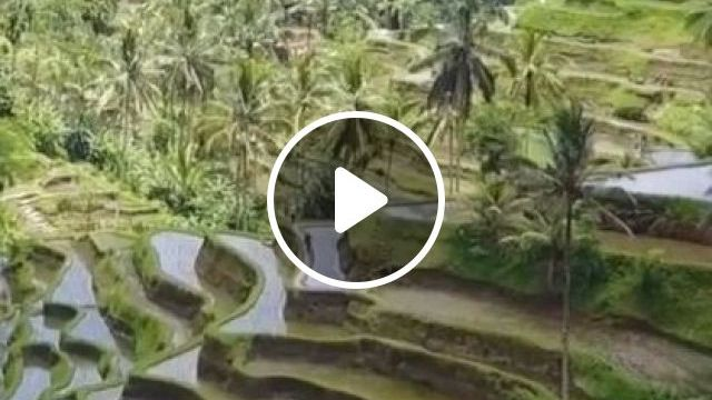 Indonesia Travel, Rice Fields In Bali - Video & GIFs   nature & travel, indonesia travel, mountain travel