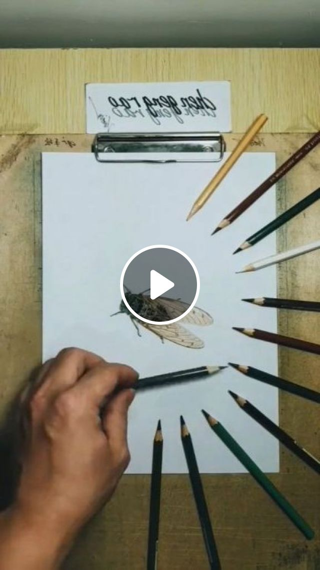 It's A Drawing Of A Housefly - Video & GIFs   art & design, drawing tools, crayons