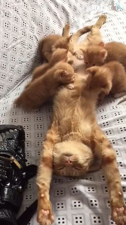 Mother cat is taking care of kittens - Funny Videos - funnylax.com - animals & pets,cute cats,caring cats