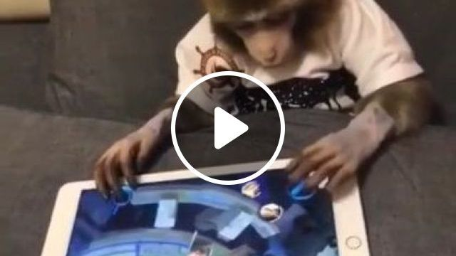 My Favorite Game Is LOL, You Also Play With Me - Video & GIFs | animals & pets, cute monkey, ipad