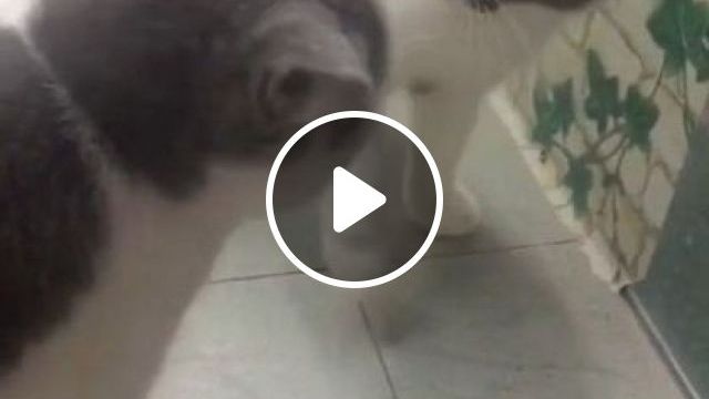 Omg So Funny In Beginning And Then In End - Video & GIFs | animals & pets, cute cats, caring cats