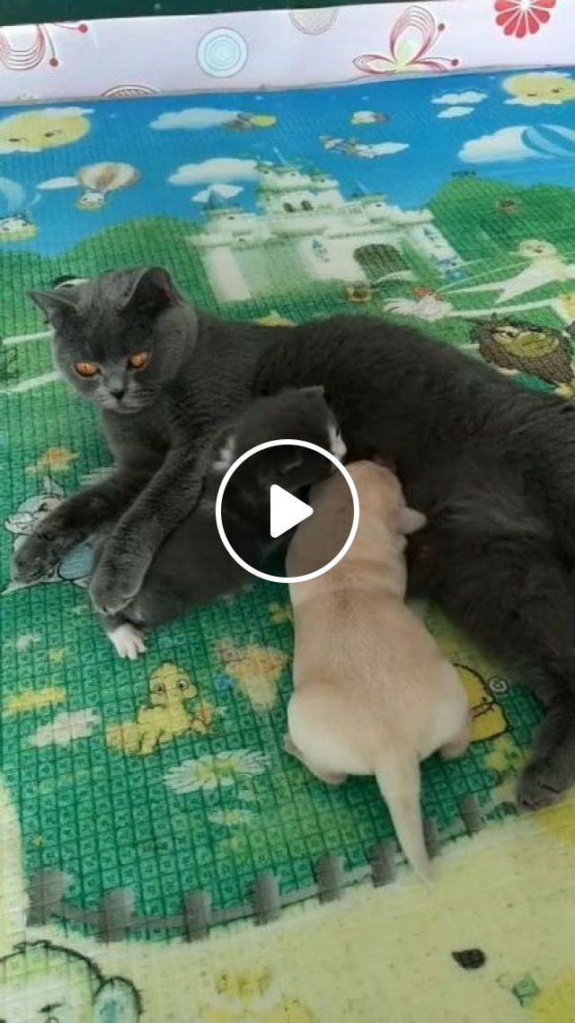 Just Because I Adopted You - Video & GIFs   animals & pets, funny animals, cute cats, smart puppies