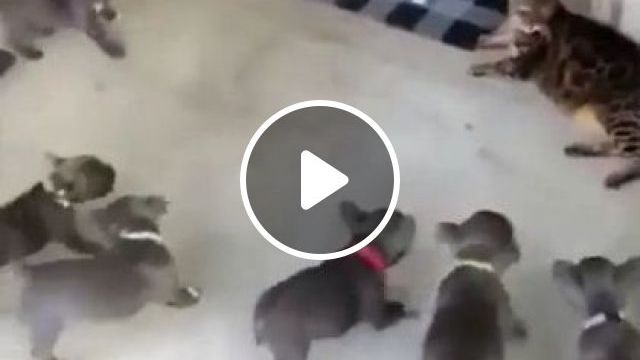 Teacher And Student - Video & GIFs | animals & pets, smart cats, cute puppies