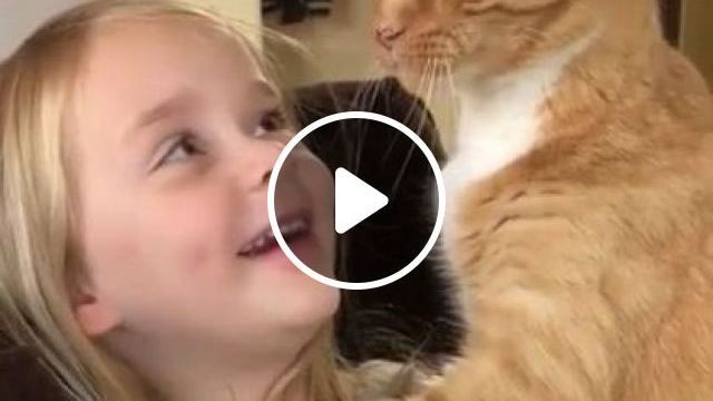 You Are Protected My Child - Video & GIFs   animals & pets, dragon li, european shorthair, aegean cat, tabby cat, maine coon