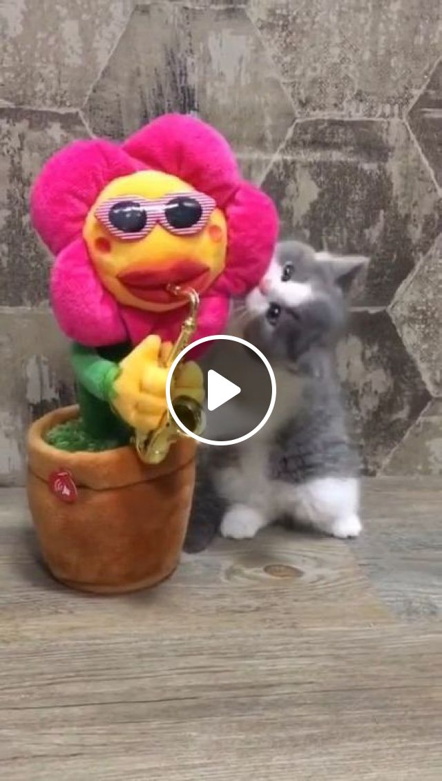 Kitten Have A New Toy Today - Video & GIFs   animals & pets, cute kittens, children toys