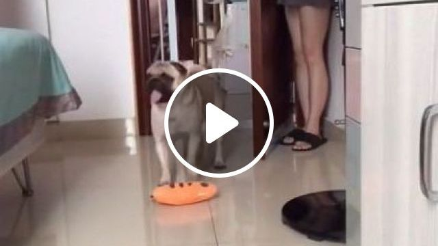 Hide And Seek.. Like It - Video & GIFs | animals & pets, cute dogs, dog breeds, caring animals