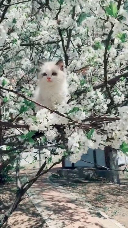 Cat and spring flowers - Video & GIFs | nature & travel,japan travel,cute cats