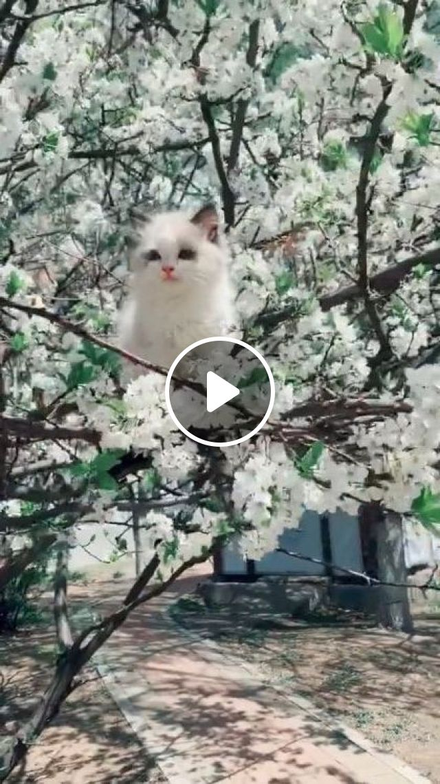 Cat And Spring Flowers - Video & GIFs | nature & travel, japan travel, cute cats