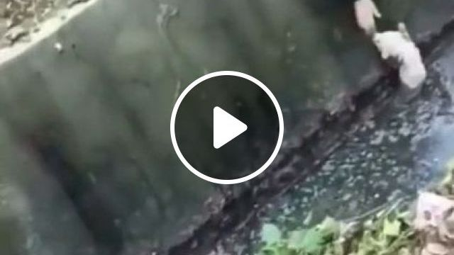 Girl Saves Puppy - Video & GIFs   animals & pets, cute puppies, dog breeds, cute girls