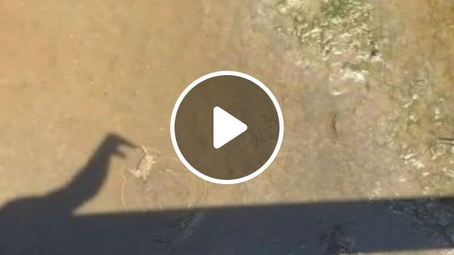 This Is A Great Example Of Multi Dimensions - Video & GIFs | animals & pets, smart animals, river crabs