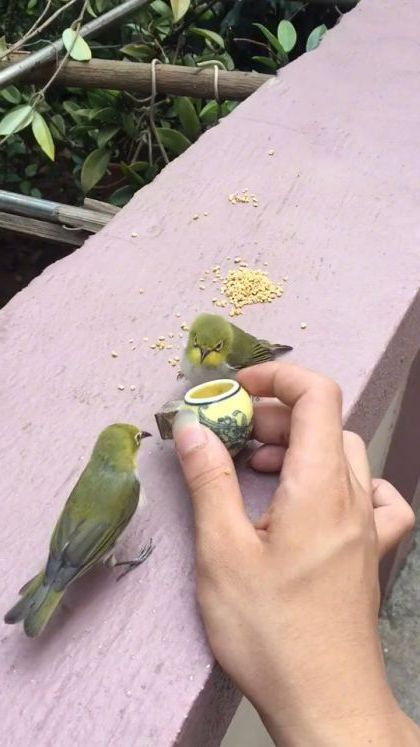 Cute birds are eating - Funny Videos - funnylax.com - animals & pets,cute birds,caring animals,delicious food
