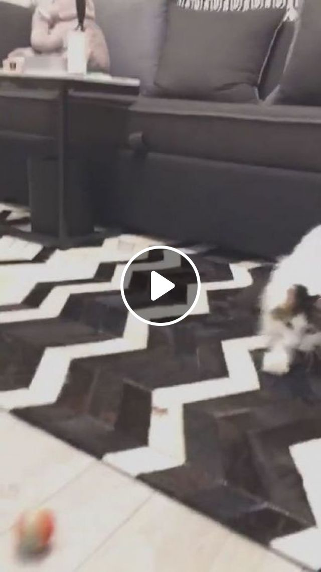Cats With Plastic Ball - Video & GIFs   animals & pets, cute cats, caring animals, apartment furniture