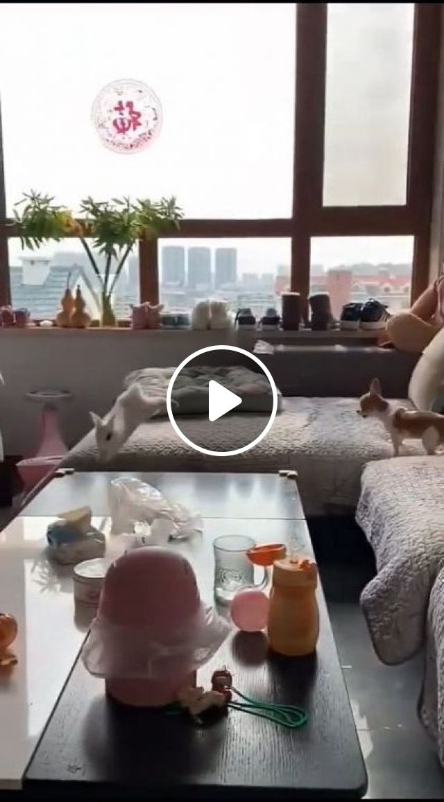 Dog And A Rabbit Are Playing - Video & GIFs | animals & pets, cute dogs, friendly rabbits, apartment interiors