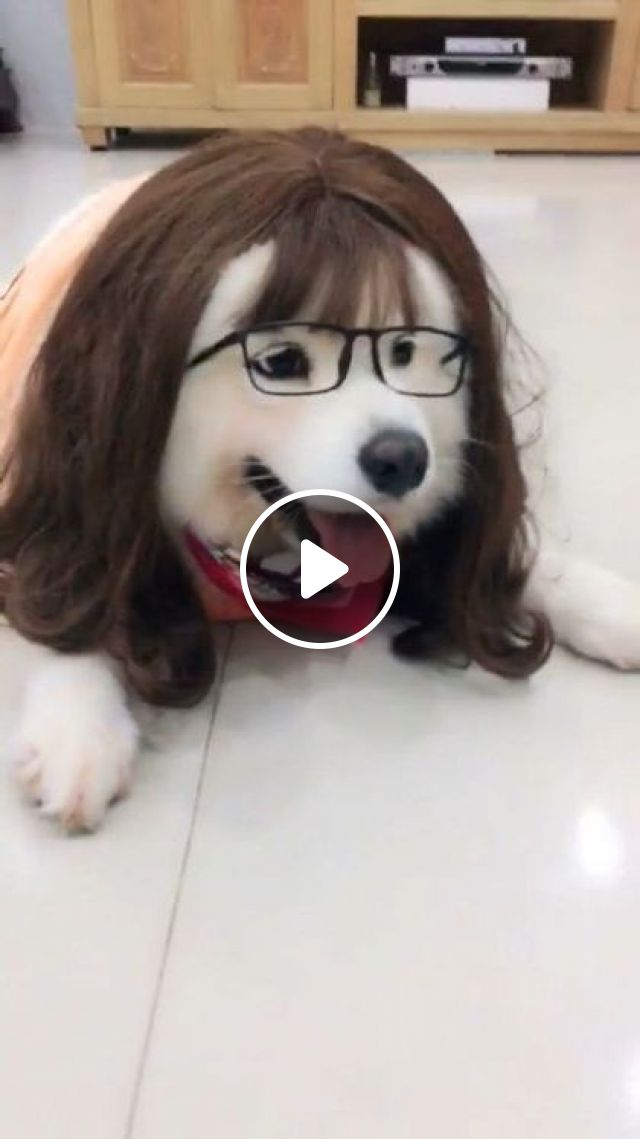 Cute Dog And Fashionable Glasses - Video & GIFs   animals & pets, cute dogs, caring animals, dog breeds