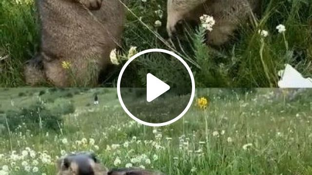 Ahhhh So Sweet And Cute - Video & GIFs   animals & pets, cute animals, caring animals