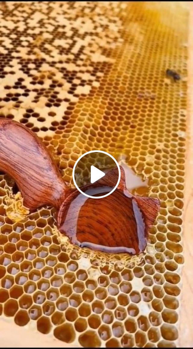 Pure Honey Is Very Delicious - Video & GIFs | art & design, delicious honey