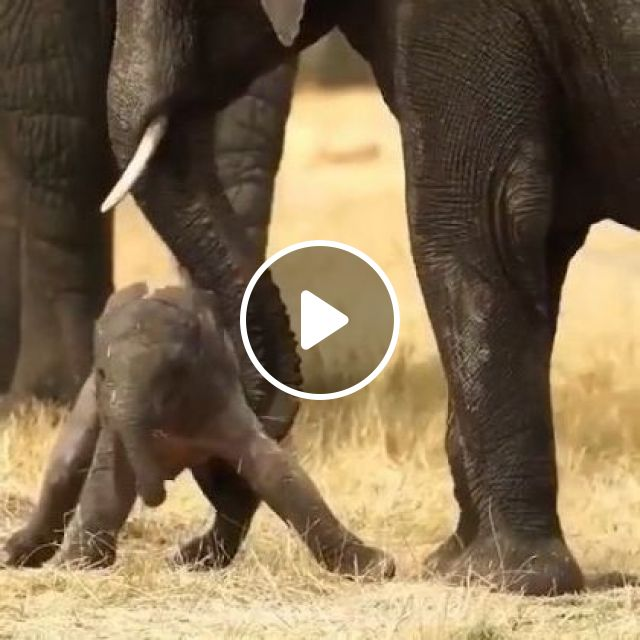Priceless Absolutely Priceless - Video & GIFs | nature & travel, africa travel, baby elephants, wildlife
