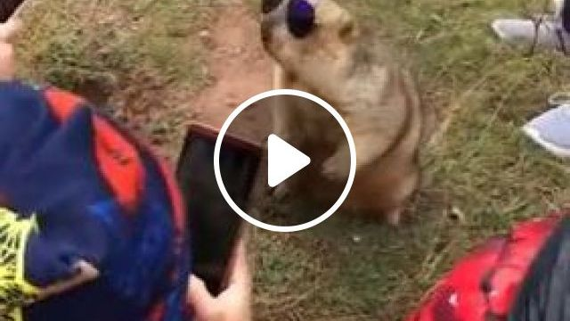 He Is Very Beautiful With Fashion Glasses - Video & GIFs | animals & pets, funny animals, smartphones, fashionable clothes