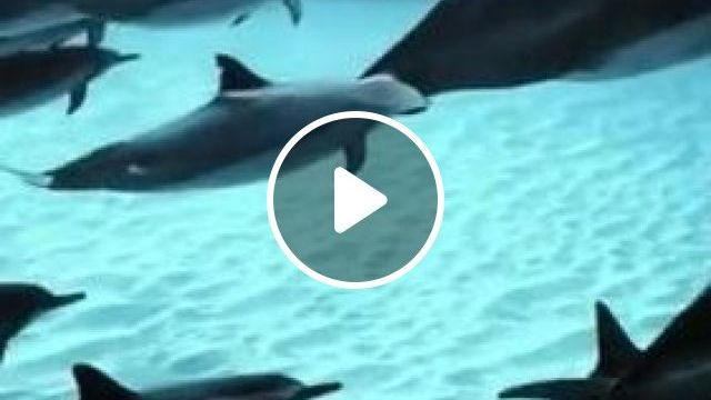Dolphins In Ocean - Video & GIFs   nature & travel, sea travel, smart dolphins