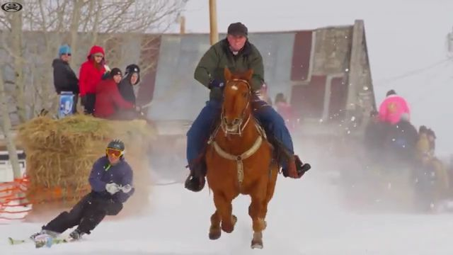 Extreme horse riding - Funny Videos - funnylax.com - animals & pets,funny animals,skiing,winter fashion