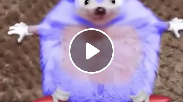 Cute Hedgehog - Video & GIFs | animals & pets, funny animals, hedgehogs, caring animals, travel animals