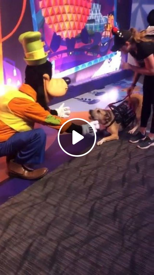 This Guide Dog Met His Hero Today - Video & GIFs | animals & pets, cute dogs, dog breeds, caring animals