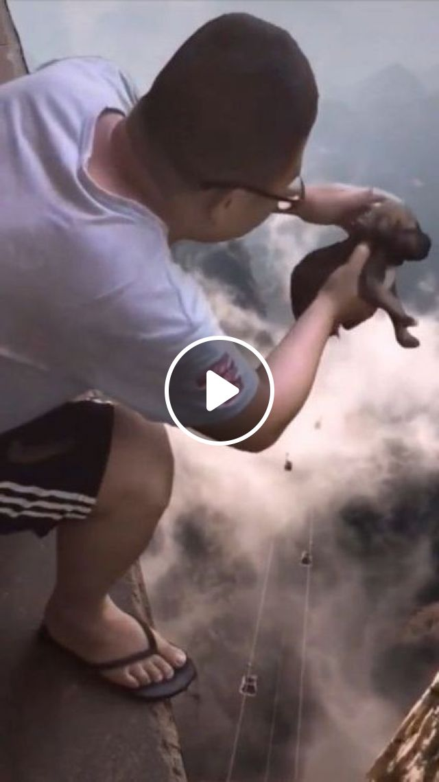 Brave Man And Puppy - Video & GIFs   brave man, male fashion clothes, cute puppies, friendly animals