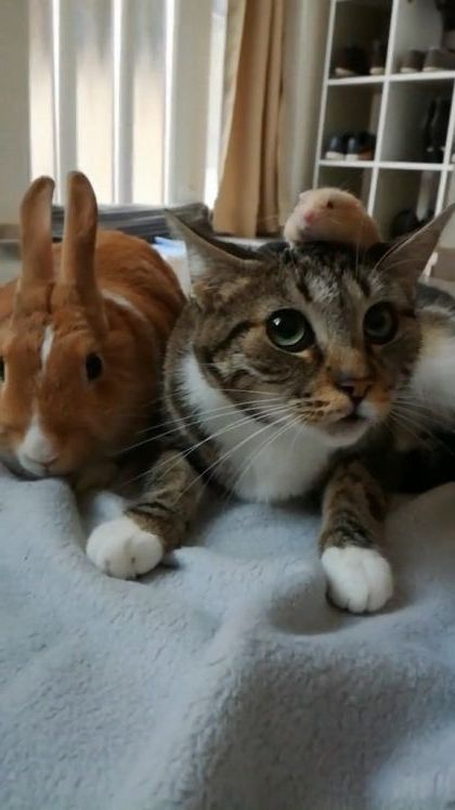 Rabbit ?? What hell on my head .. Cat said