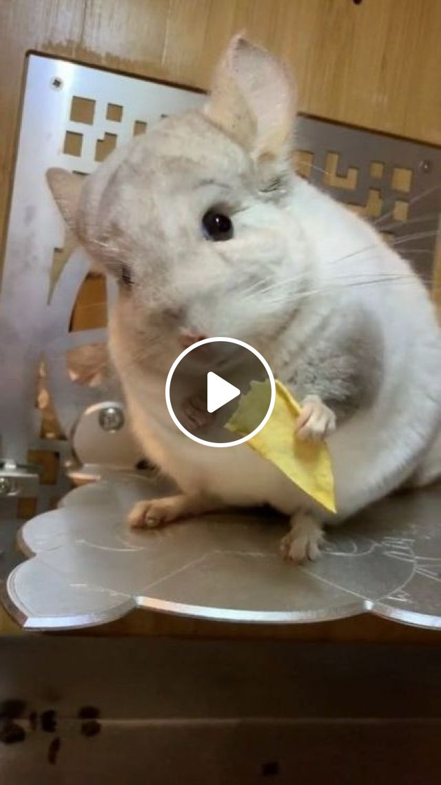 Lunch Is Potato Chips - Video & GIFs   animals & pets, lunch, french fries, cute animals