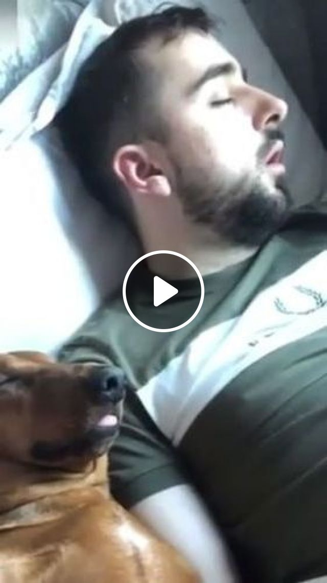 Beautiful Dream Of Dog And Man - Video & GIFs   animals & pets, cute dogs, breed dogs, dogs early, good for health, man