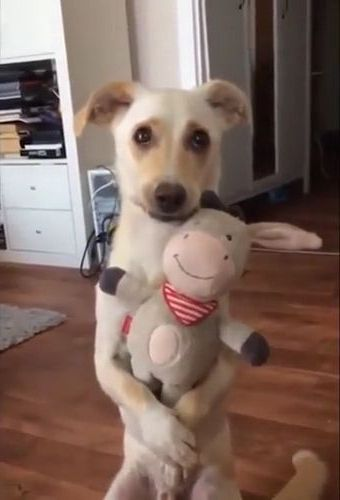 When they got you  perfect gift - Funny Videos - funnylax.com - animals & pets,cute dogs,friendly animals,gifts,stuffed animals