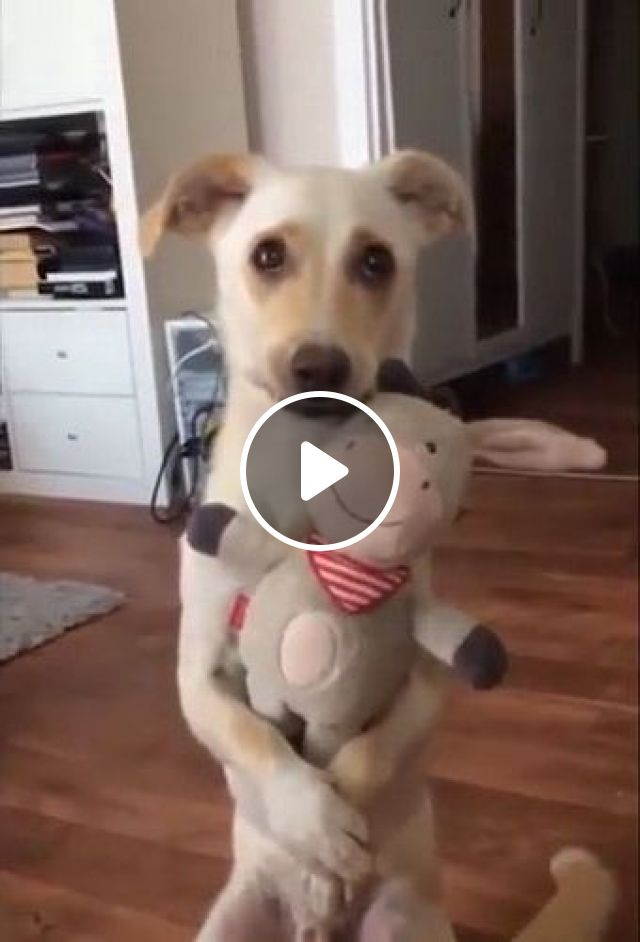 When They Got You Perfect Gift - Video & GIFs | animals & pets, cute dogs, friendly animals, gifts, stuffed animals