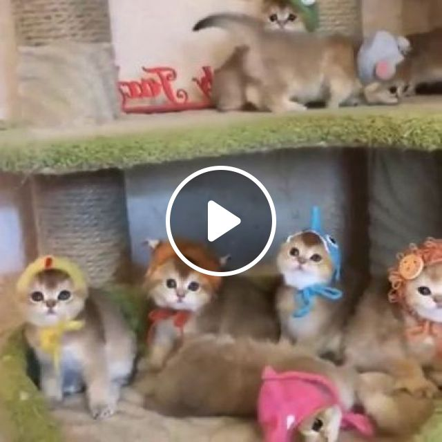 Kittens with cute hats, animals & pets, cats, cute kittens, cute hats, cat care