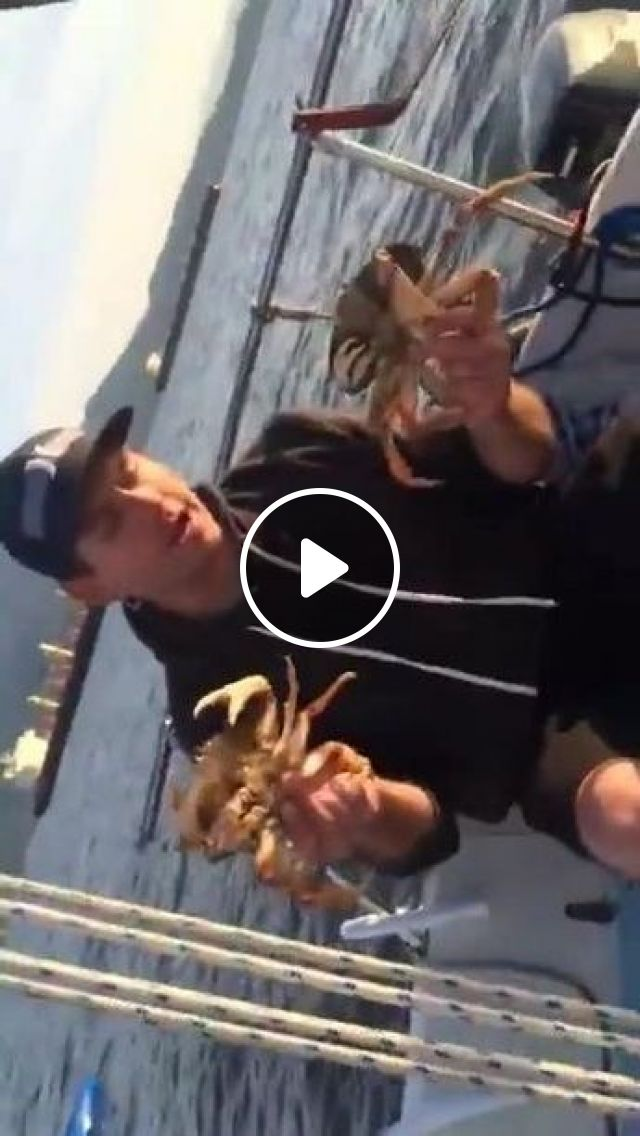 On Tourist Boat, Man With Crabs - Video & GIFs   Nature & tourism, tourist boats, smart men, men's clothing, crabs, American travel