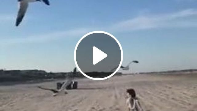 child and  birds on the beach - Funny Videos - funnylax.com - nature & travel,kid,young fashion,birds,beach