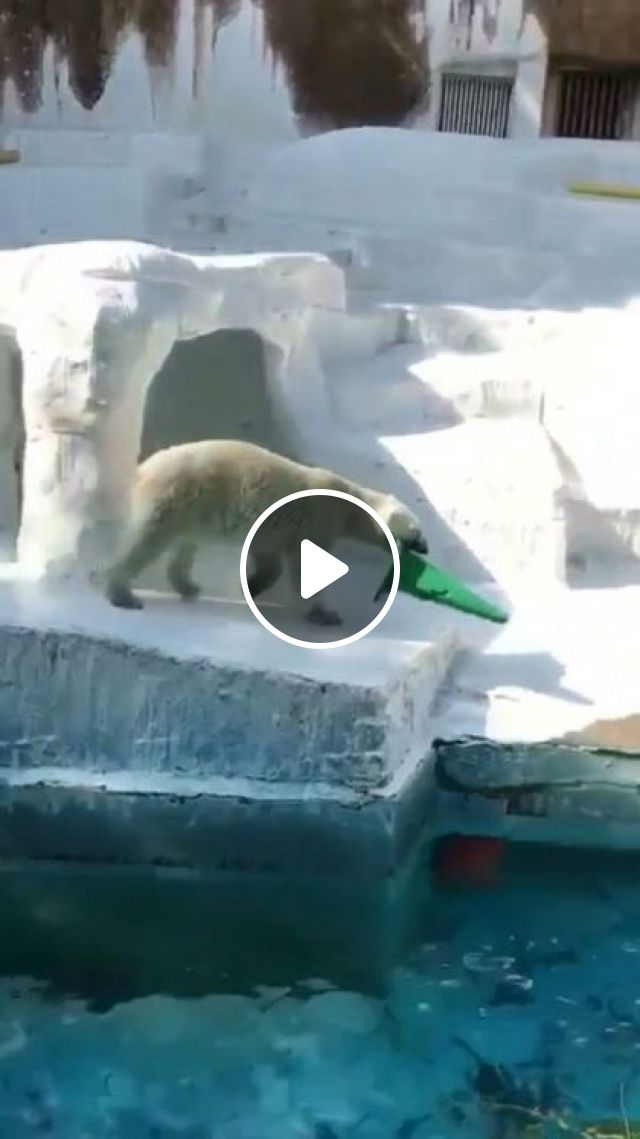 Bear Does Not Want To Stay On Land - Video & GIFs   animals & pets, smart bears, friendly animals