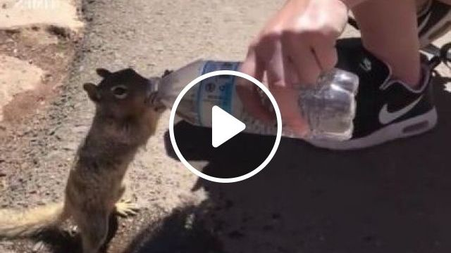 This Thirsty Squirrel Casually Reached Out For A Grand Canyon Visitor's Water - Video & GIFs | animals & pets, tourists, men's fashion, fashion shoes