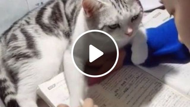 Cat Wants Her To Stop Learning And Playing - Video & GIFs   animals & pets, white cat, cute girl, school supplies, wooden table