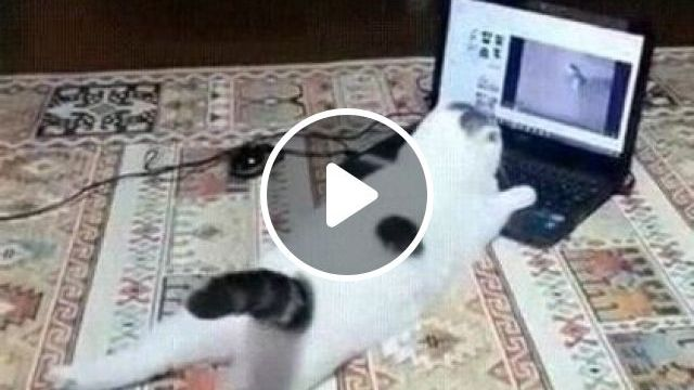 Cat watching animal show on laptop - Funny Videos - funnylax.com - animals & pets,cute cats,cat breeds,business laptops,dell computers