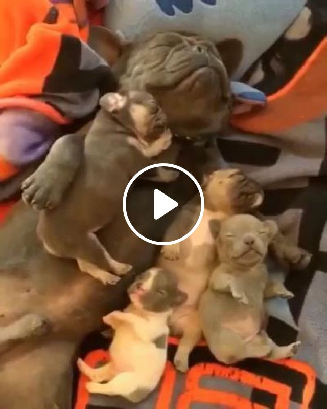 Dog And Puppies Sleeping In Bed - Video & GIFs | animals & pets, father dogs, puppies, beds, bedrooms, luxurious furniture