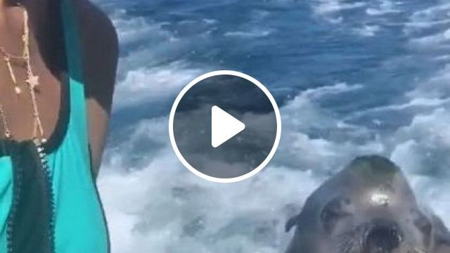 Girl And Seal In Zoo - Video & GIFs | nature & travel, girls, clothes fashion, tourists, seals, animals, zoo