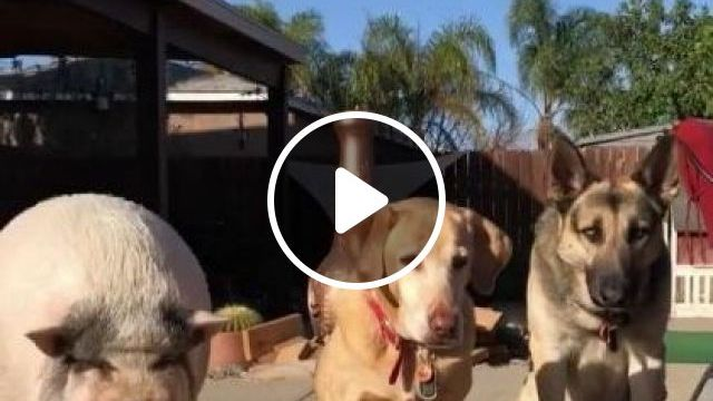 What Are Pets Watching? - Video & GIFs | animals & pets, dogs, dog breeds, pet care