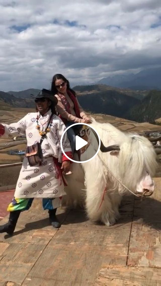 Girl Is Traveling To Tibet And Riding A Cow - Video & GIFs   nature & travel, tibetan tourism, cow riding, clothes fashion, fashion shoes