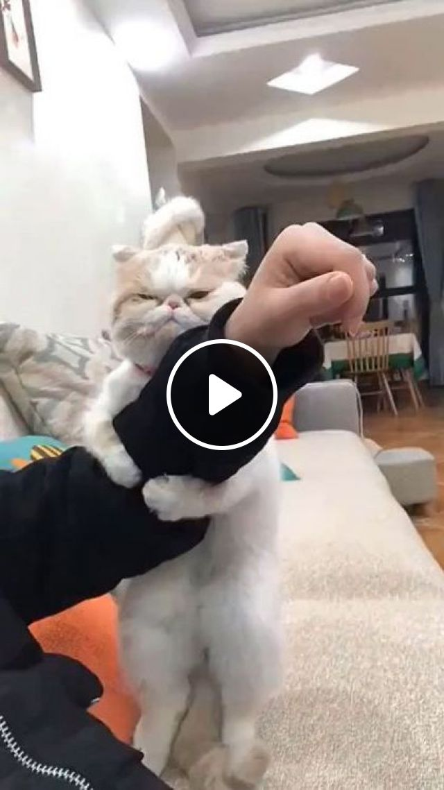 Please Don't Leave Me - Video & GIFs | white cats, cat breeds, interior apartments