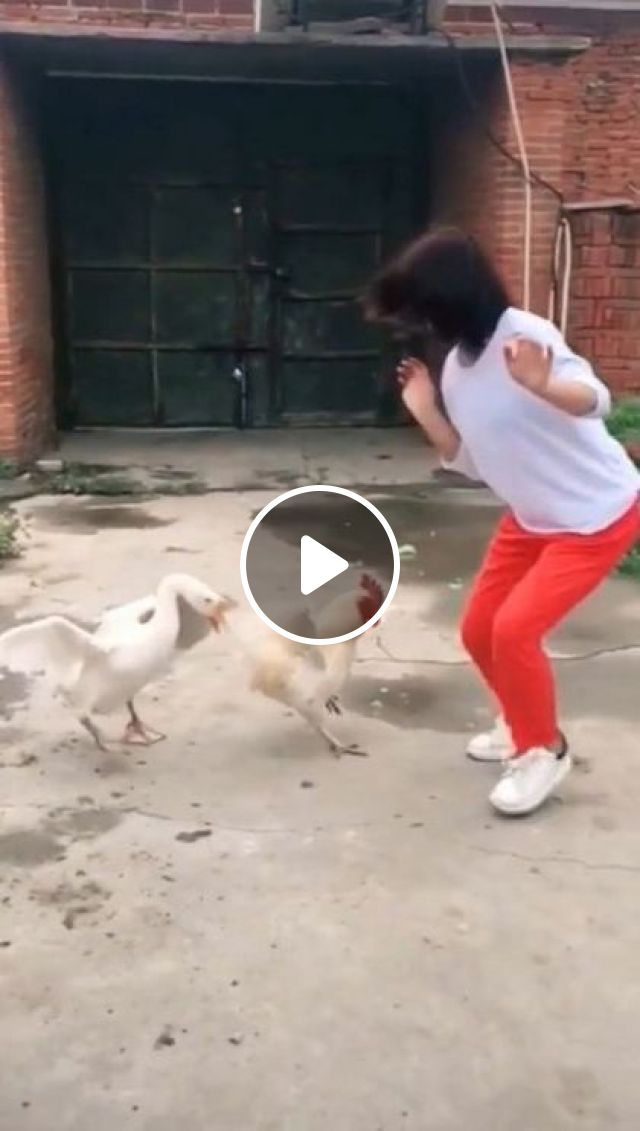 Why... Chicken And Duck Act Like That.. - Video & GIFs | cute girls, clothes fashion, fashion shoes, funny animals