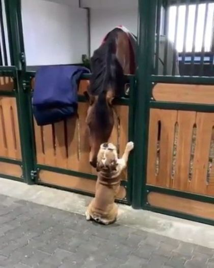 Horse has endless patience for their new friend
