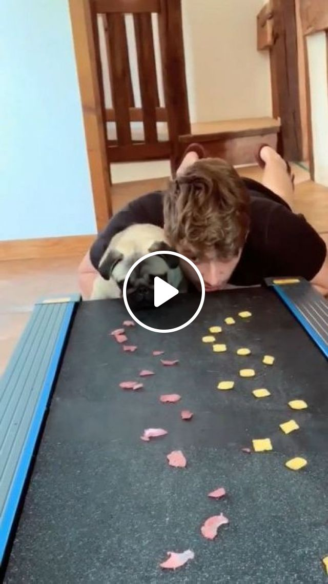 Wait A Minute Who Eats Faster - Video & GIFs   electric treadmill, conveyor, delicious food, cute dogs, dog breeds