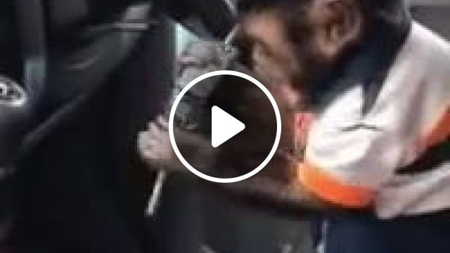 Monkey Is Doing Something In Luxury Car - Video & GIFs   auto & technique, monkeys, animals, pets, luxury cars, smart animals