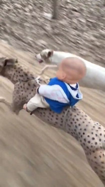 race of pets - Funny Videos - funnylax.com - animals & pets,racing dogs,dog breeds,friendly animals,children's toys