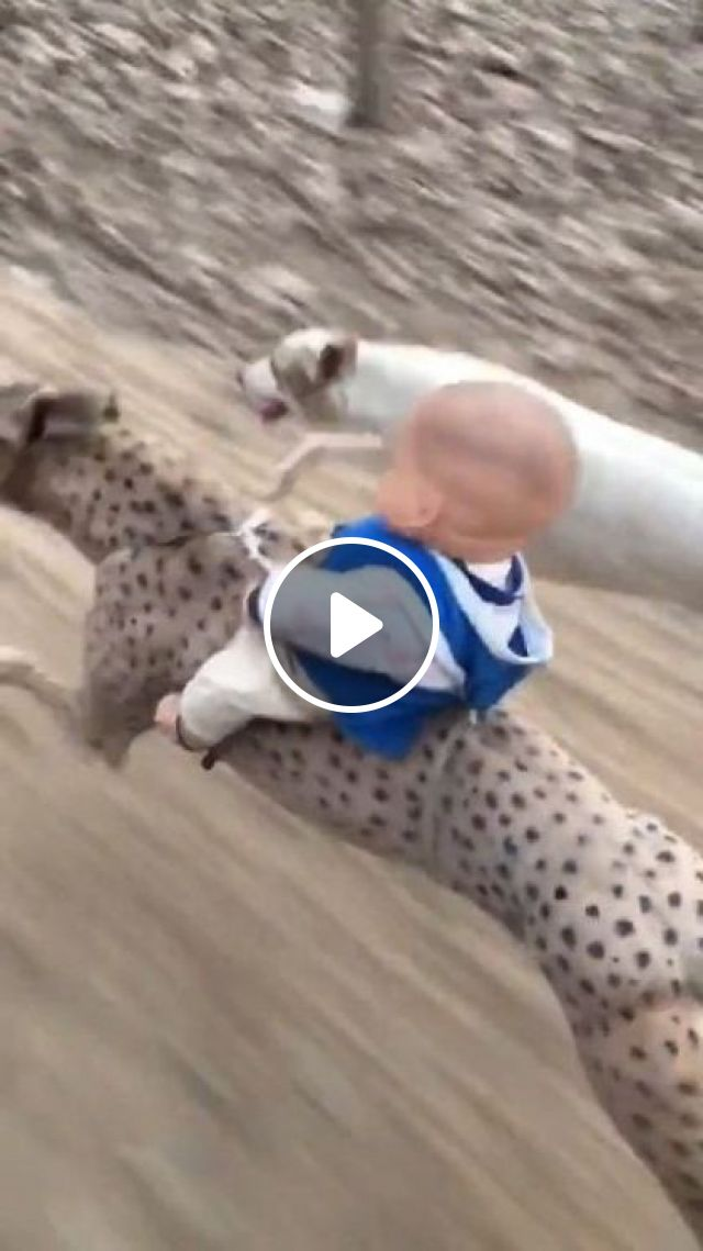 Race Of Pets - Video & GIFs | animals & pets, racing dogs, dog breeds, friendly animals, children's toys